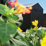 Gardening 2012 - 115_1517.JPG