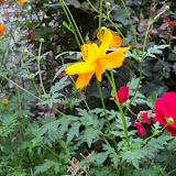Gardening 2012 - 115_1977.JPG