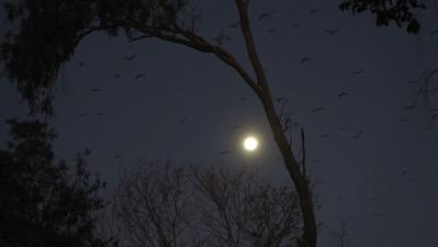 Moon and Bats