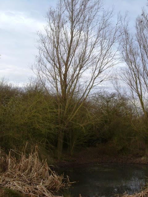 Conservation Area November 2008 - DSCF1348.jpg