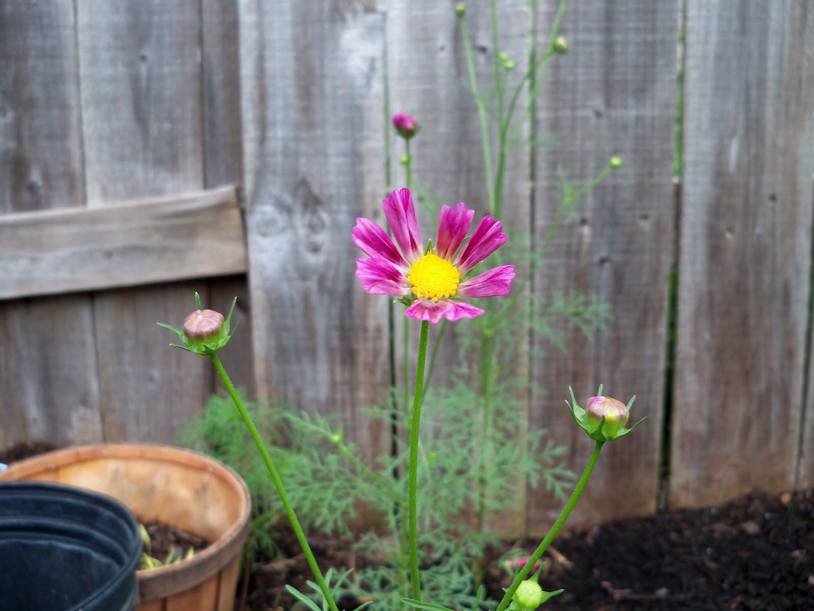 Gardening 2010 - 101_1576.JPG