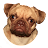 Patty the Pug avatar image