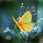 Flower 045_1280px.jpg