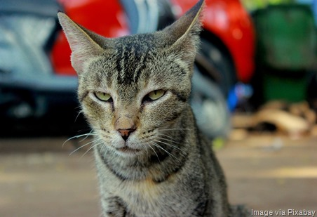 cat-unhappy-face
