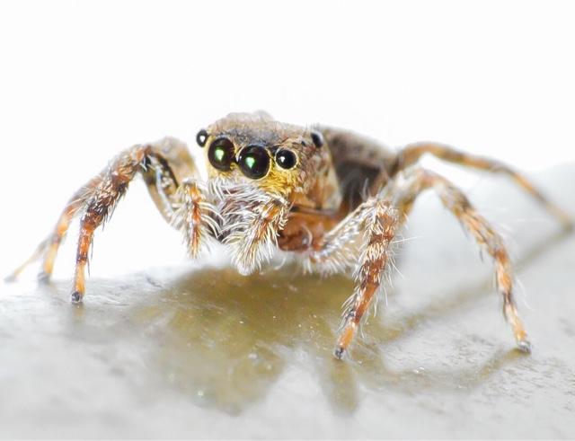 Macro photo - Spider