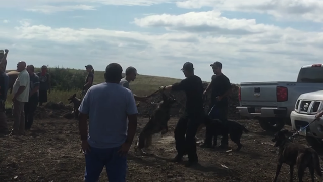 Hired Dakota Access oil pipeline security officers attack Native American protesters with dogs and pepper spray, 3 September 2016. Photo: Matika Wilbur