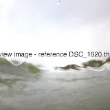 DSC_1620.thumb.jpg