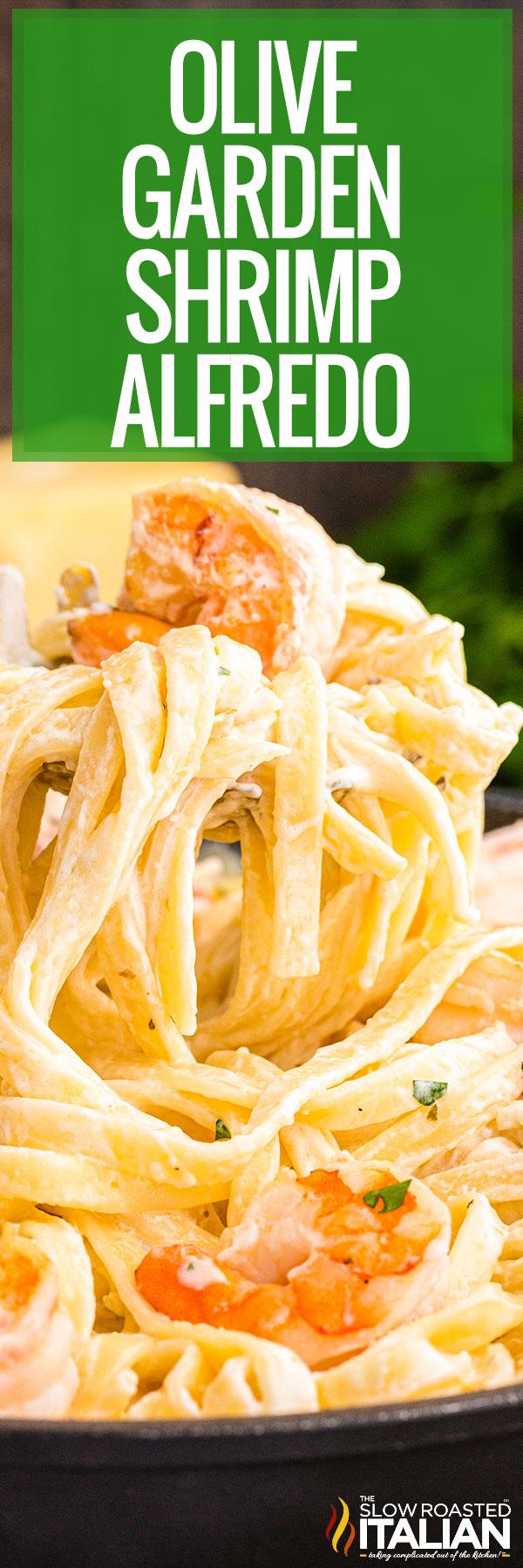 Olive Garden Shrimp Alfredo Recipe Closeup