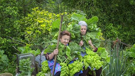 Botánica Insólita, una feria para descubrir el mundo vegetal