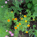 Gardening 2010, Part Two - 101_3359.JPG