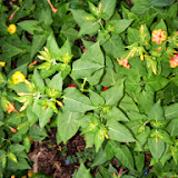 Gardening 2014 - 116_1975.JPG