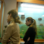 Археологический музей ВГПУ 026.jpg