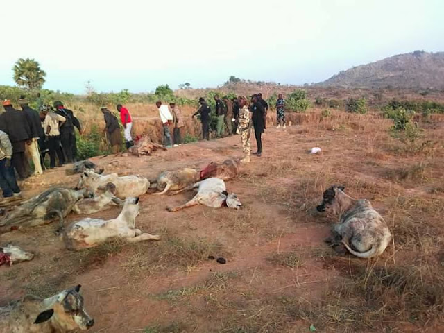 VIEWER DISCRETION:- Militia Group AttacksFulani Herdsmen, Kill Them And Their Cows(Graphic Photos)