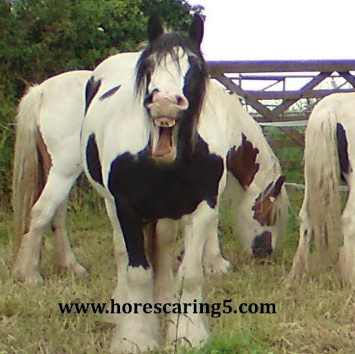 Teresa Haywood (Horsecaring5)