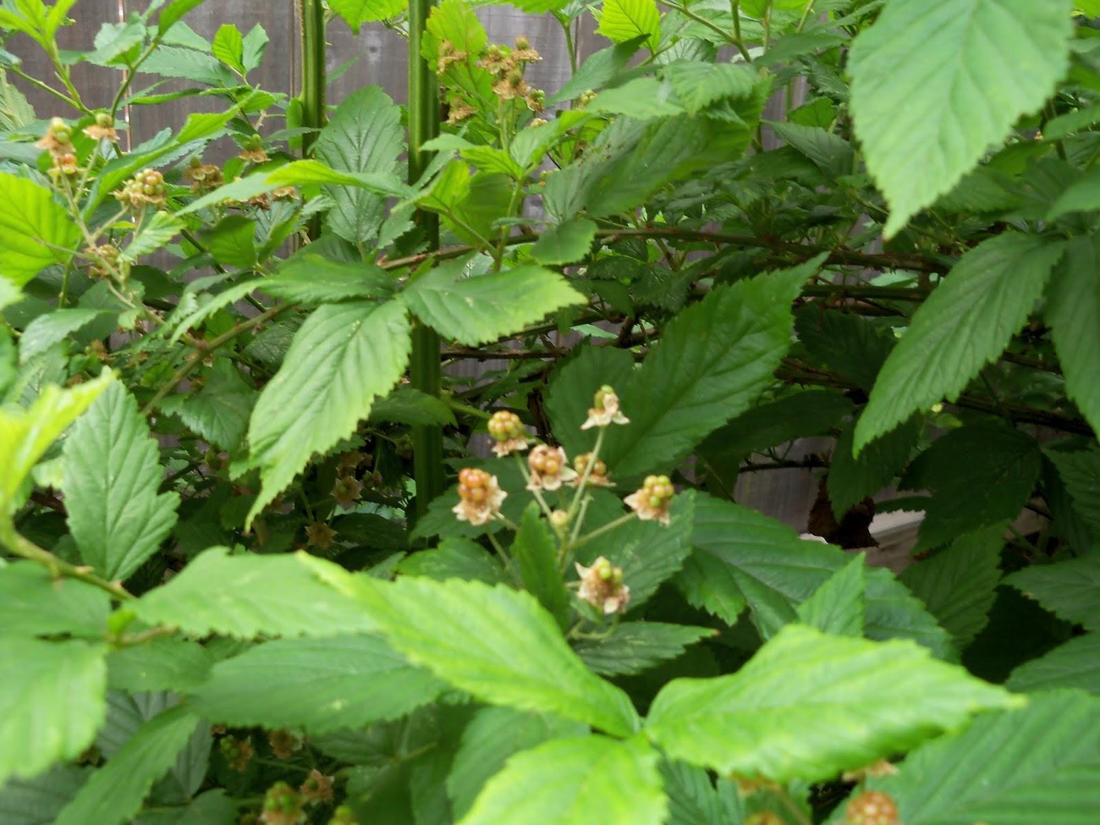 Gardening 2013 - 115_6079.JPG