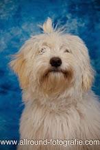 Huisdierreportage Hondendag Uden Dierendag (4 oktober 2008) - 11
