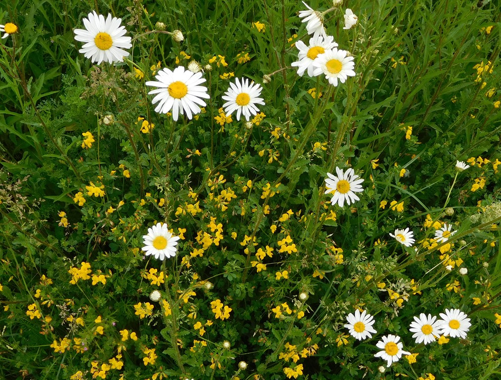 [8+wild+flowers%5B6%5D]