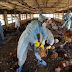 Outbreak of deadly disease; Bird flu spreads to 26 states and the FCT