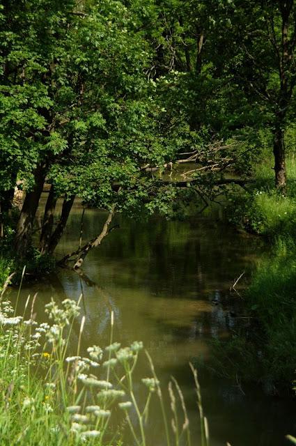 W Polanach Surowicznych - 18.06.2011_031.jpg