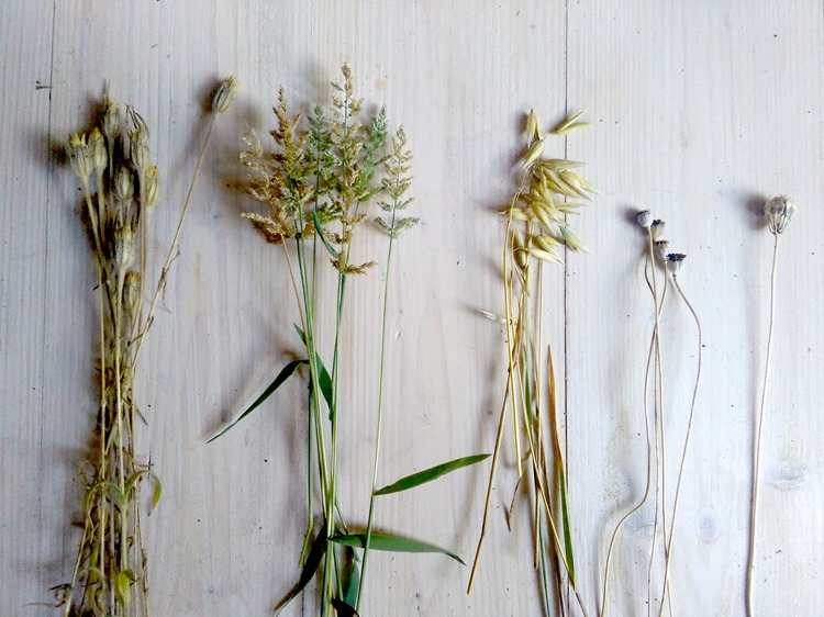 seeds and grass