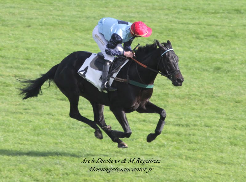Photos Auteuil 2-11-2014 (48h de l'obstacle) IMG_5191