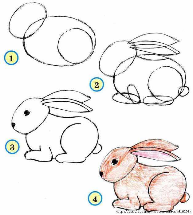صور حيوانات لتعاليم الرسم للاطفال في خطوات سهله مدونة بحث نت