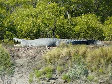 wildlife-crocodile-1.jpg