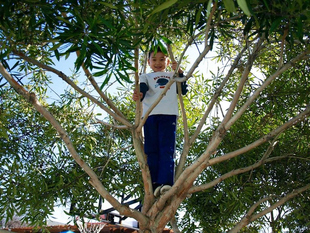 Shunji in tree recess