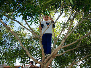 Shunji in tree recess
