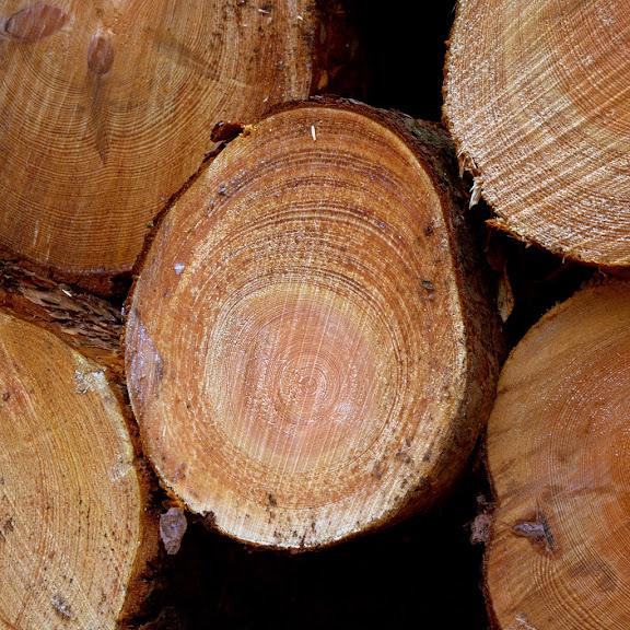 Wood 14