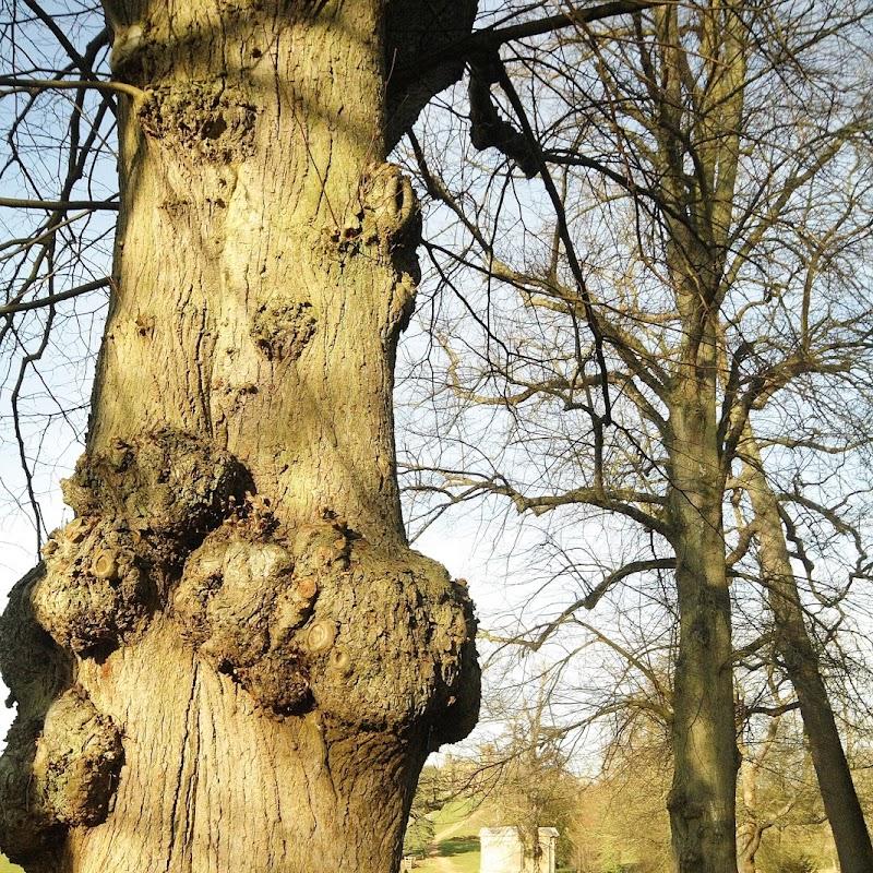 Stowe_Trees_38.JPG