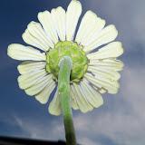 Gardening 2011 - 100_8891.JPG