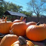 Pumpkin Patch 2014 - 116_4418.JPG