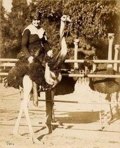 Ostrich Women