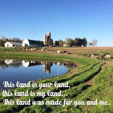 dairy farm scene with pasture and pond