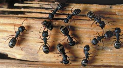 Côn tránh để đồ gỗ nơi ẩm thấp, cách bảo quản đồ gỗ