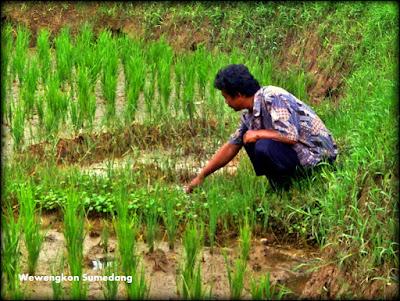 Potensi Keunikan Daerah, Mata Air Asin di Desa Ciuyah