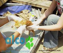 Campaña de asistencia en Mangomarca SJL (14)