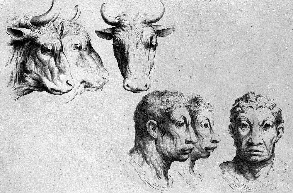 charles-le-brun-physiognomic-heads-10