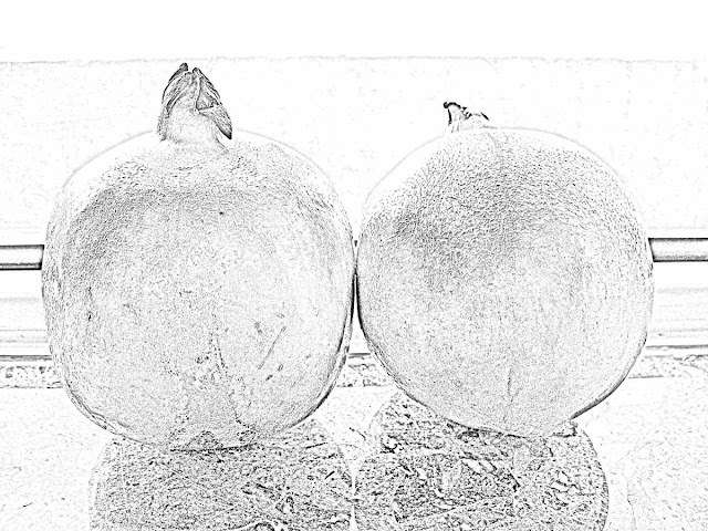 two pomegranates sketch