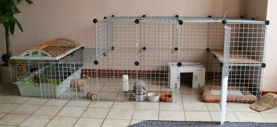 cohabitation chien lapin r ussie. Black Bedroom Furniture Sets. Home Design Ideas