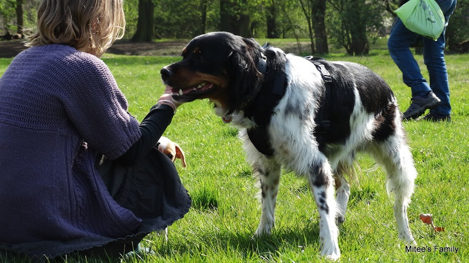 Balades canines en Nord (59)/Pas de Calais (62) - Boulogne-sur-Mer, Calais et Lille - Page 4 DSC01811