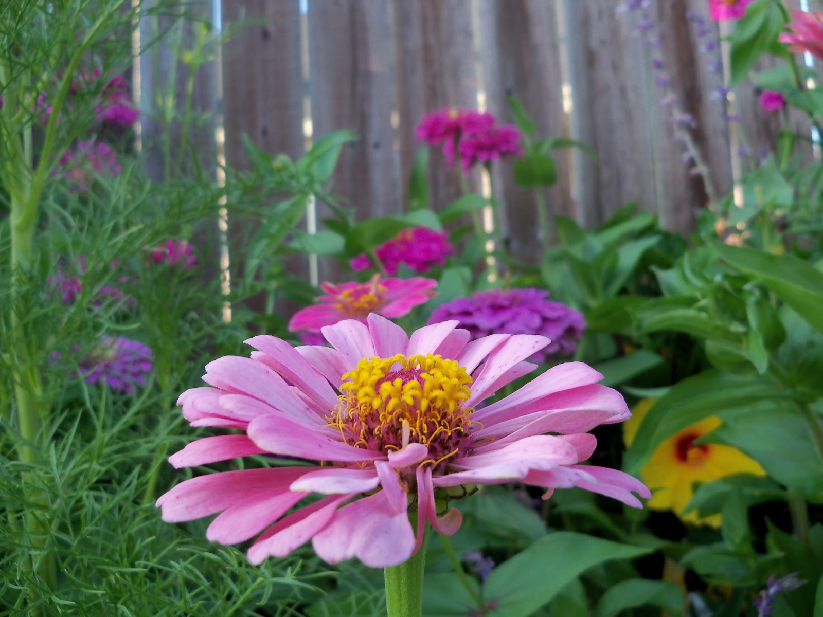 Gardening 2012 - 115_2635.JPG