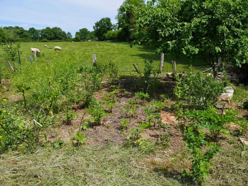 Un jardin en formation P1020928