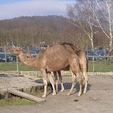 Besuch im Opelzoo am 18.02.2007