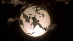 12 les chauves-souris