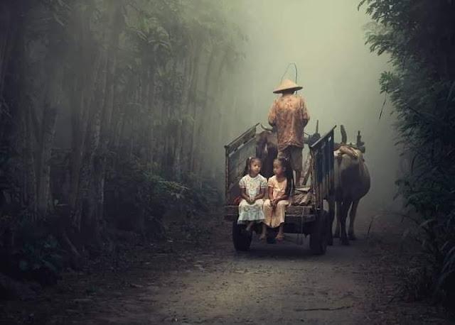 Kehidupan Di Kampung Indah Tanpa Gadget Pemandangan Desa Indonesia Naik Kerbau