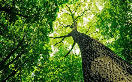 Δασικές εκτάσεις ίσες με το μέγεθος της Γαλλίας αναγεννήθηκαν από το 2000 μέχρι σήμερα