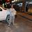 Fatih Mehmet Duman's profile photo