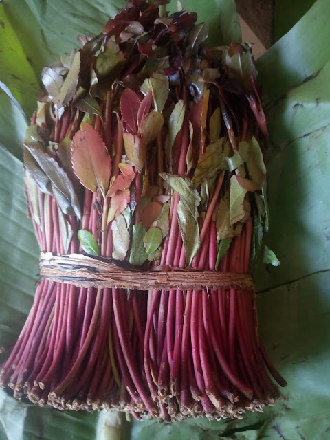 Miraa and Muguka banned at statehouse